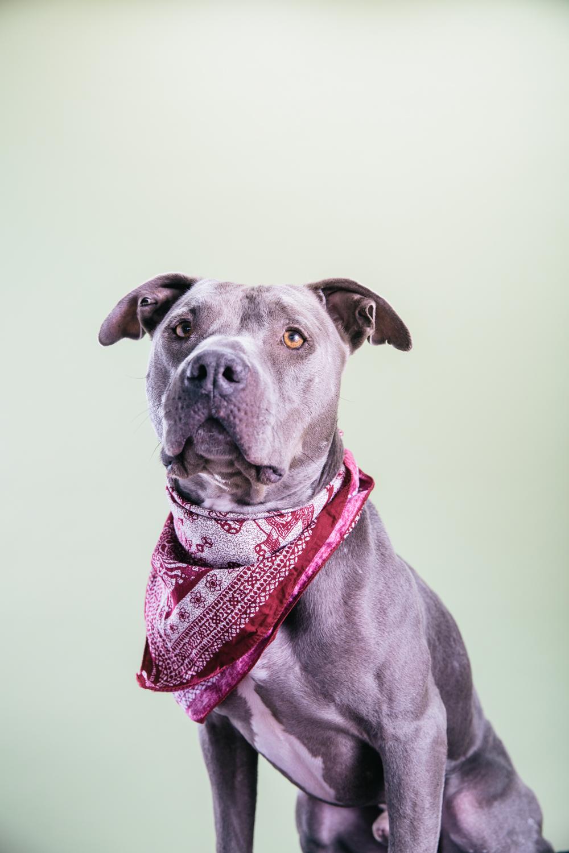 Smolowe_CHEWSLIFE_Dogs-102016.jpg