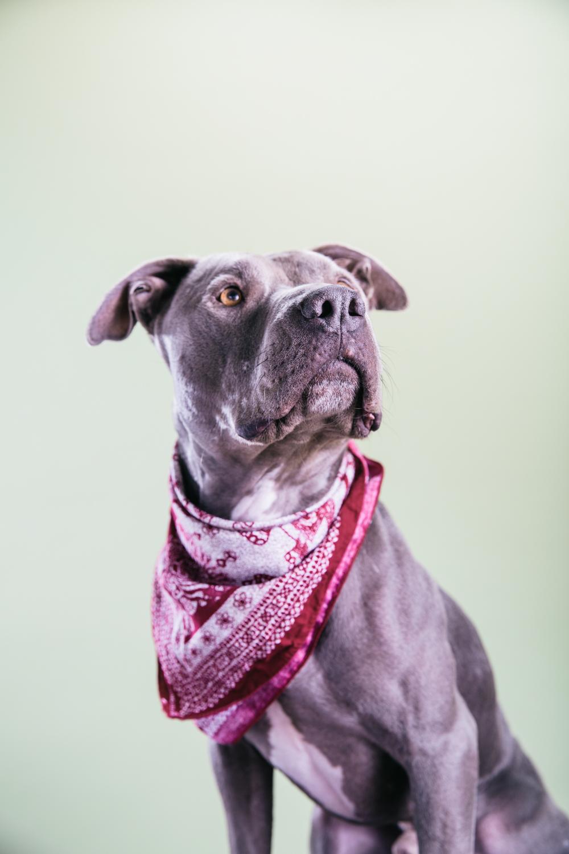 Smolowe_CHEWSLIFE_Dogs-122016.jpg