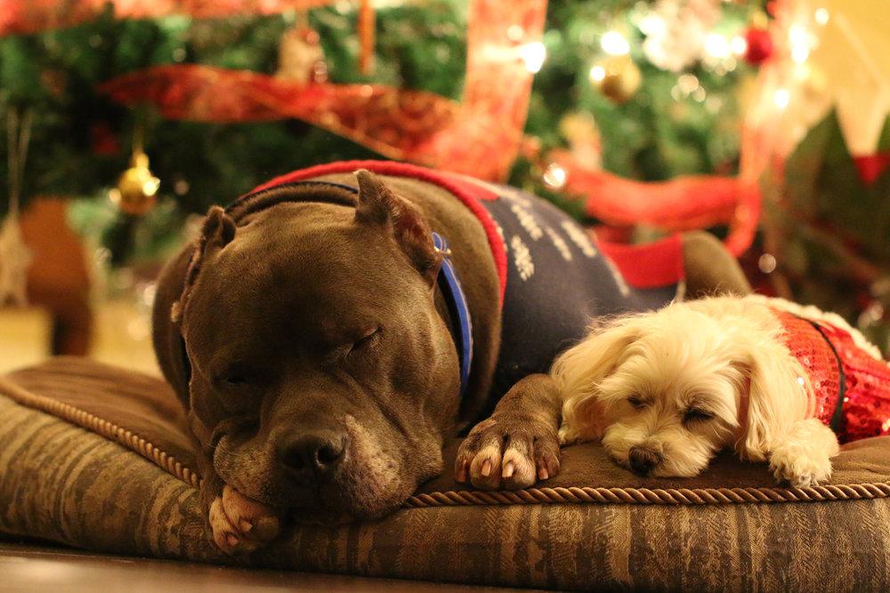 dogs xmas2.jpg