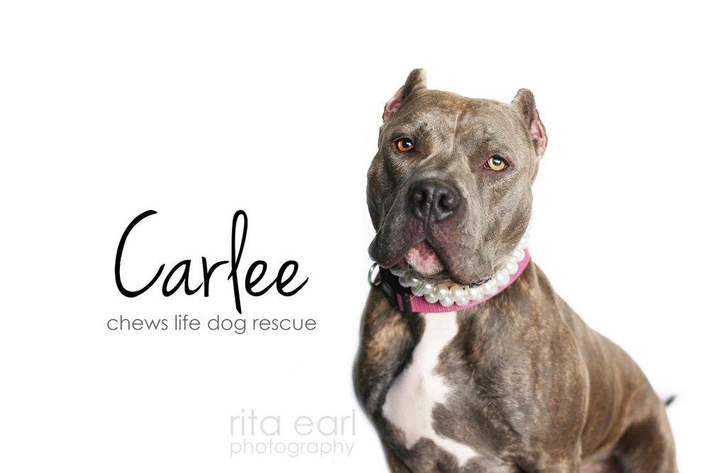 carlee3.jpg