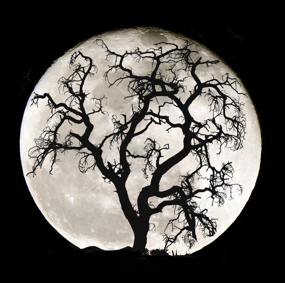 Moon Wisdom.jpg