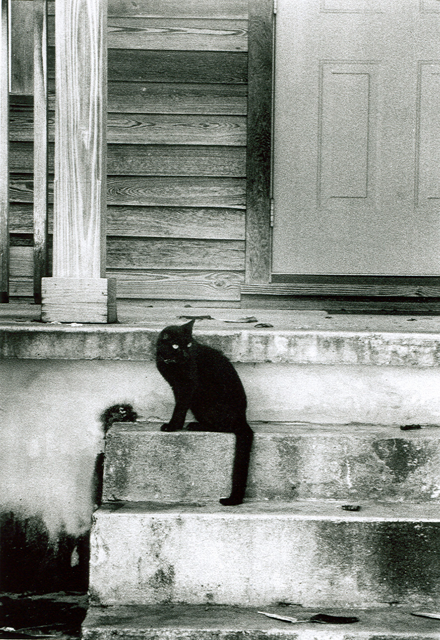 Key West Cat.jpg