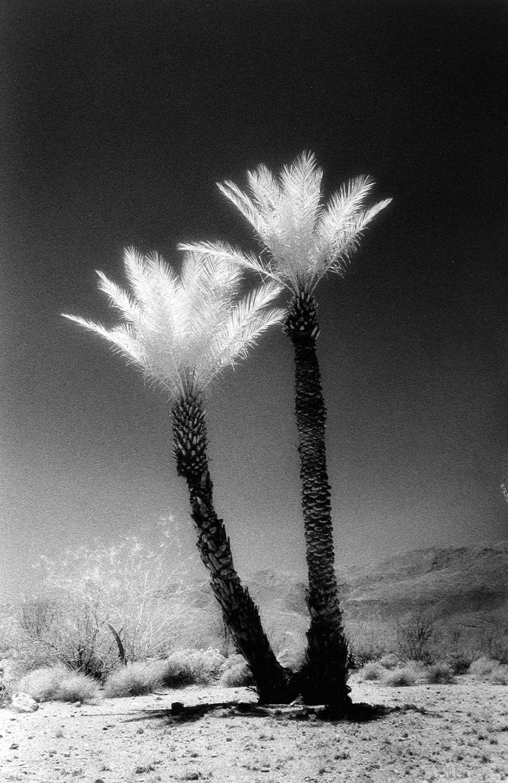 Twin Palms.jpg
