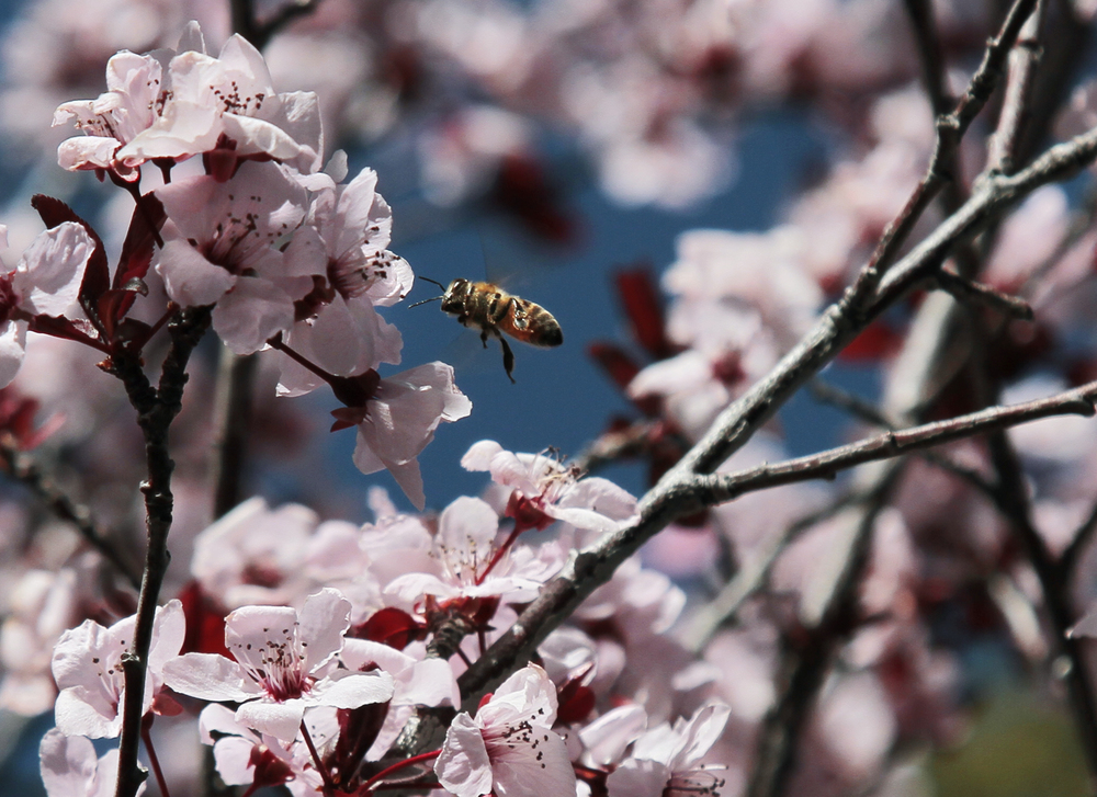 031016 Bee and Blossom.jpg