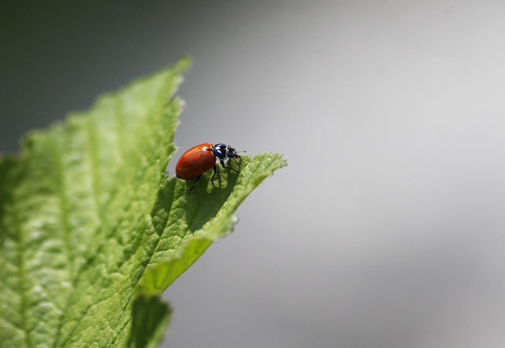 053110 Out on a Leaf.jpg