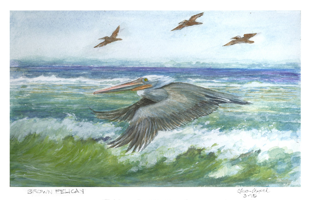 Brown Pelican 12.5 w x 8 h.jpg