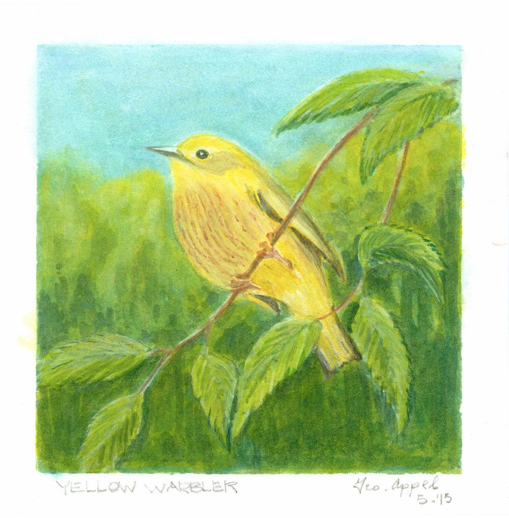 Yellow Warbler 7.87 w x 8 h.jpg