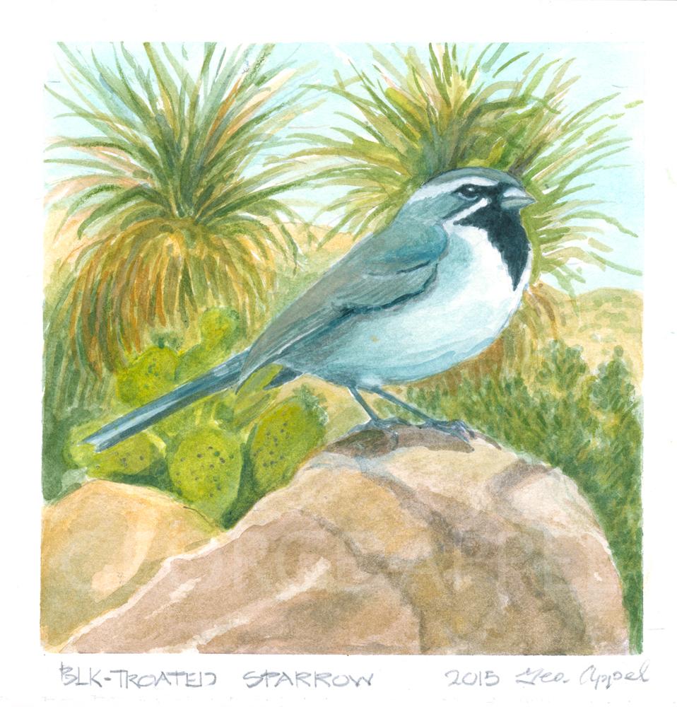 Black-Throated Sparrow GEO Appel.jpg
