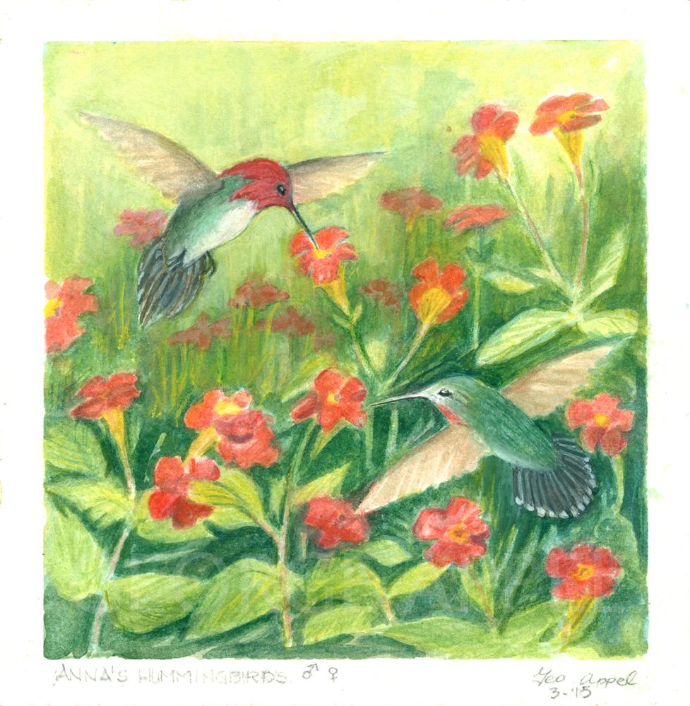 Anna's Hummingbirds Geo Appel.jpg