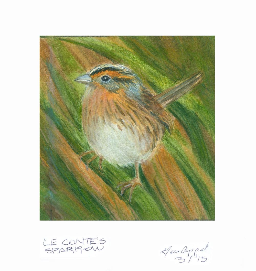Geo Appel Le Conte's Sparrow.jpg