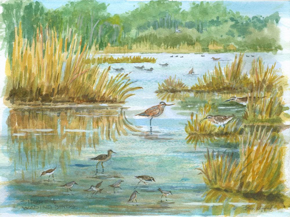 Geo Appel Shore Wading Birds 9x12.jpg