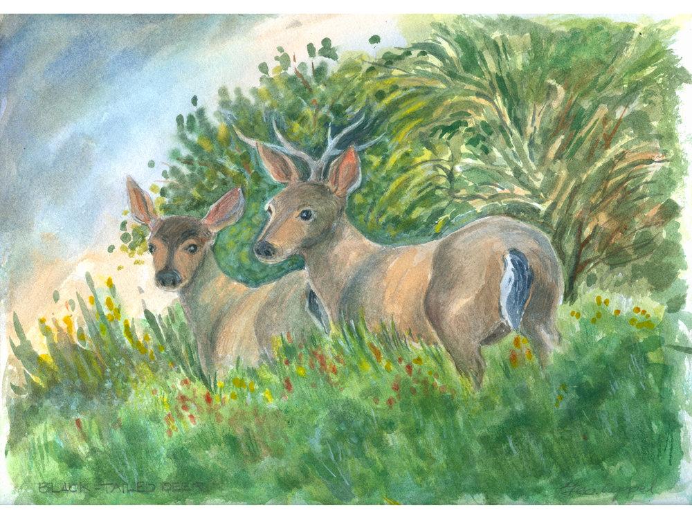 Geo Appel  Black-Tailed Deer 9 x 12.jpg