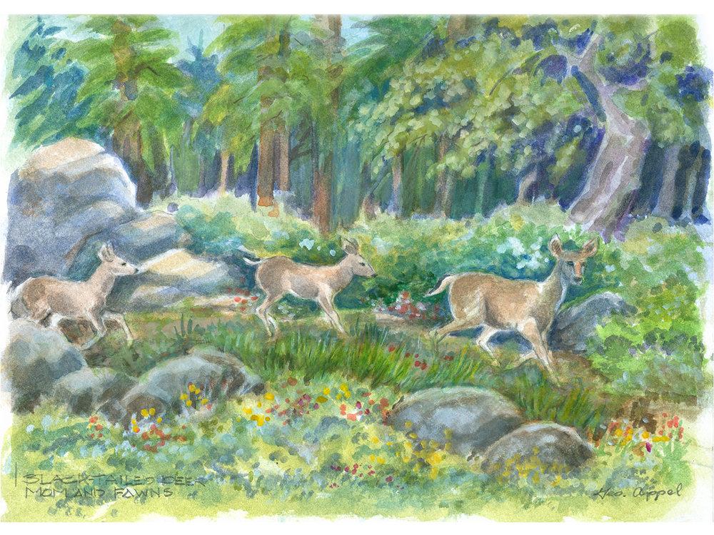 Geo Appel  Blk-Tailed Deer Mom & Fawns 9 x 12.jpg
