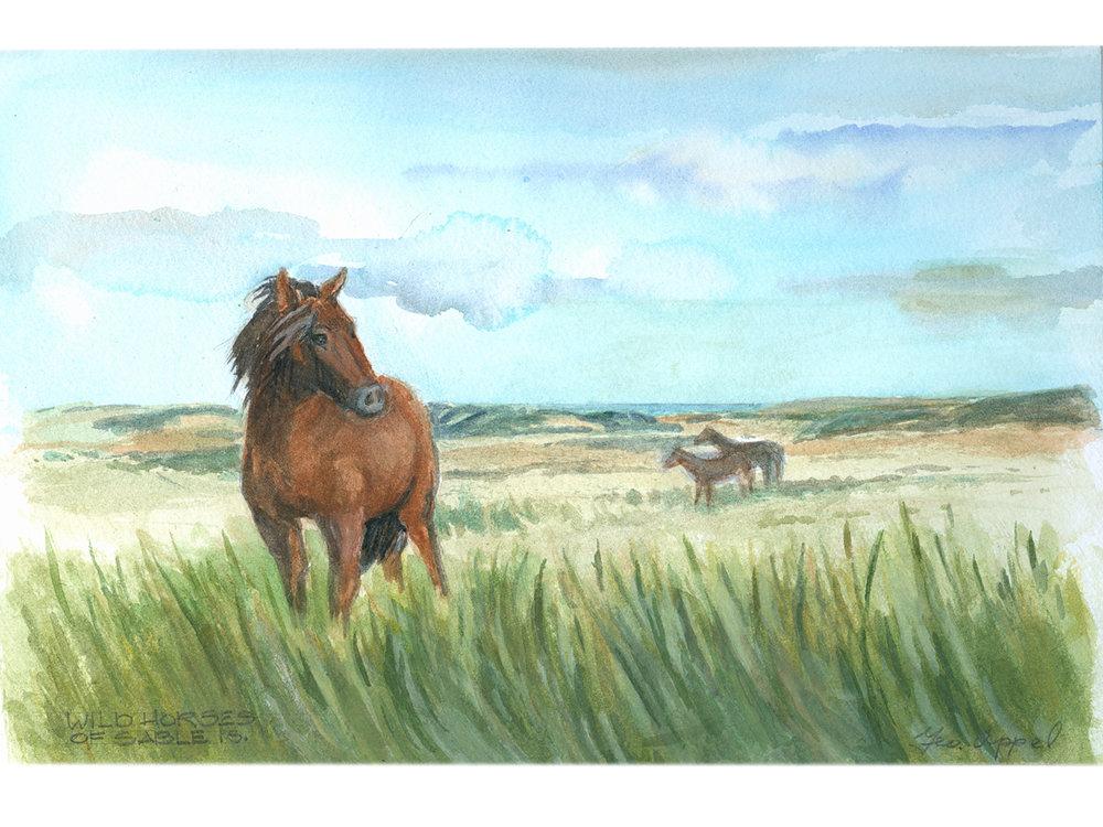 Geo Appel  Wild Horses on Sable Is 9 x 12.jpg