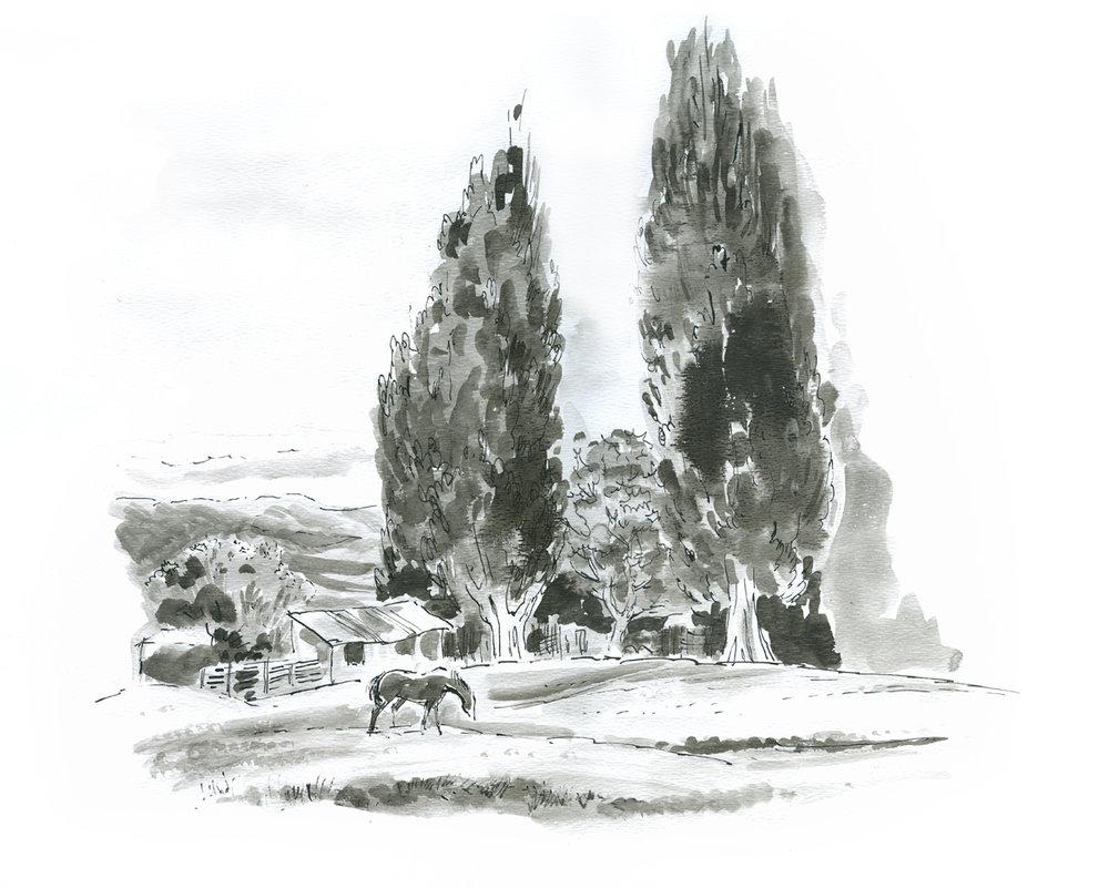 FD Geo Appel Horse on Field 12x15.jpg
