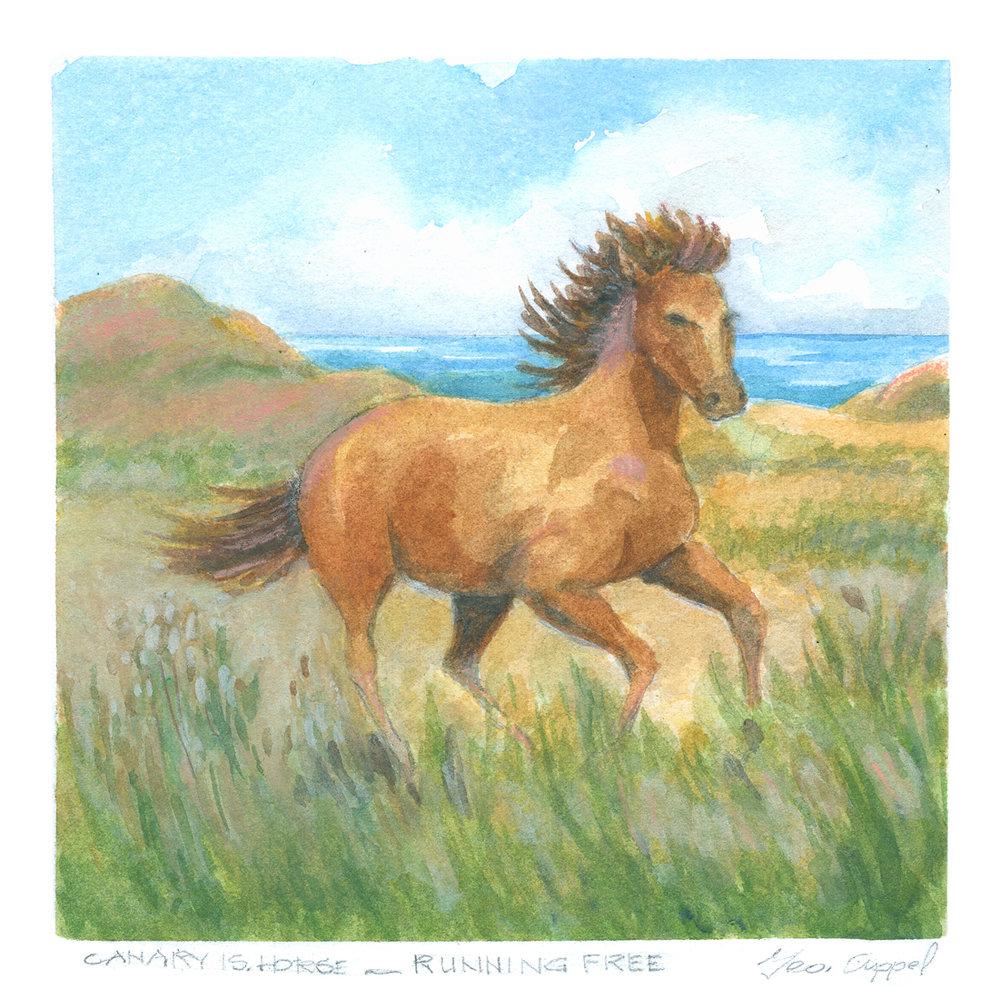 Geo Appel Canary Island Horse 8x8.jpg