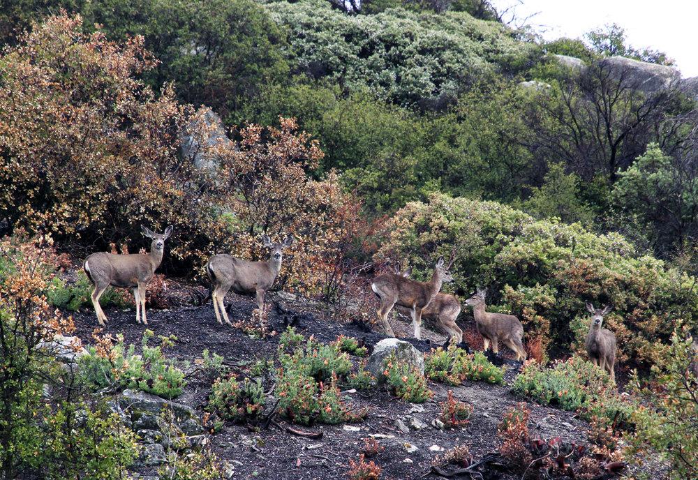 041112+Deers+in+the+Rain+1.jpg