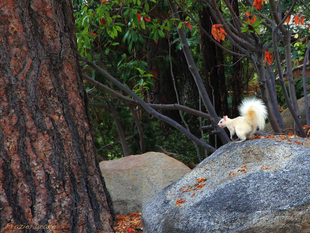 080313+Albino+Squirrel.jpg