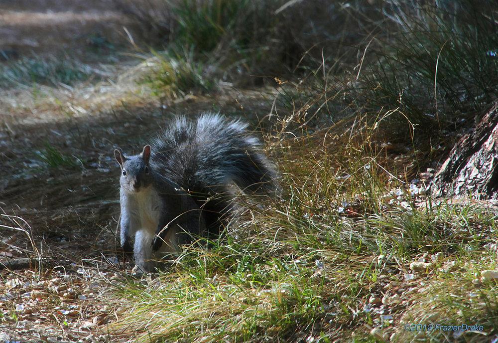 020812+Squirrel+in+grass.jpg