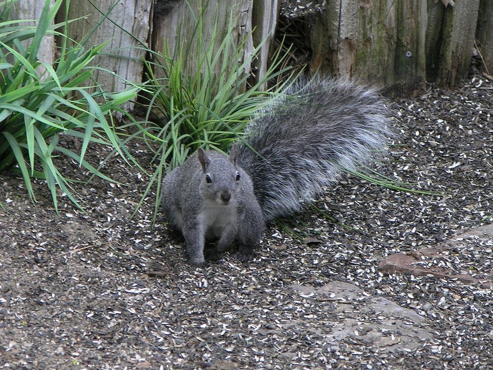 042205+Squirrel+in+seed.jpg