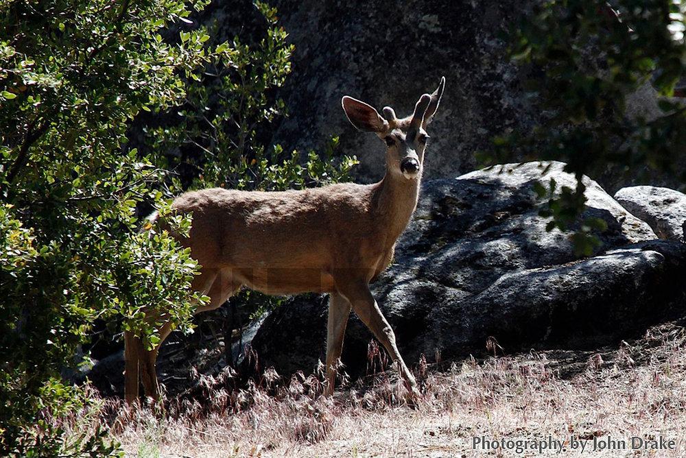 123109+Deer+with+antlers.jpg