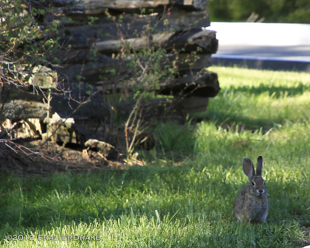 041612+Bunny+in+the+grass.jpg