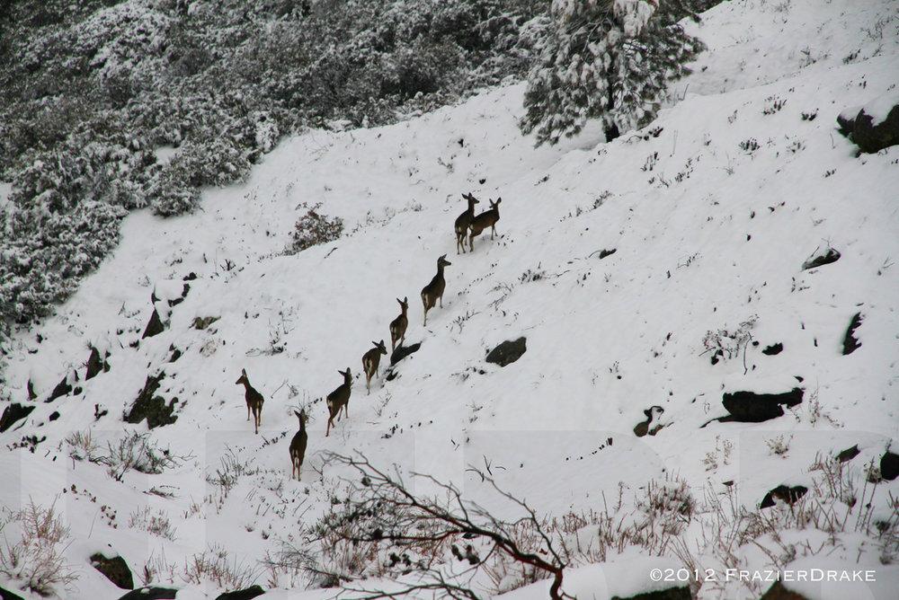 041412+8+Deer+in+snow.jpg