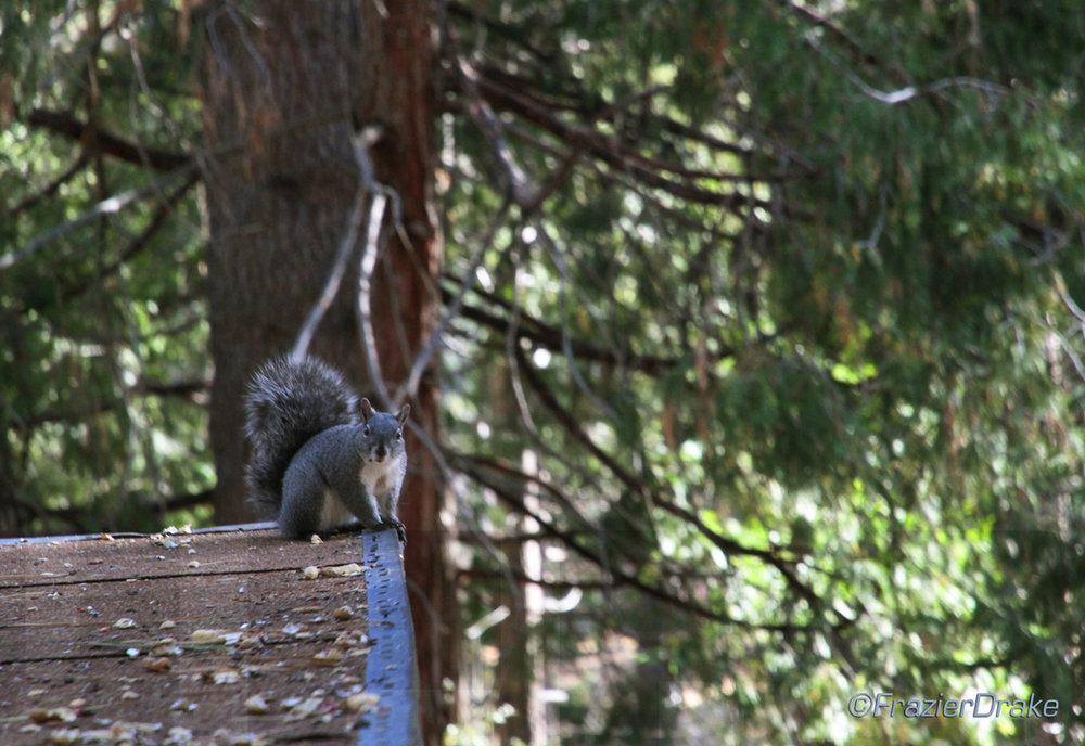 020812+Squirrel+on+Rooftop.jpg