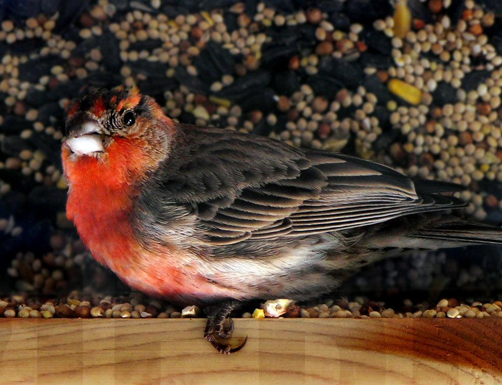 013108+Bird+&+Seed.jpg