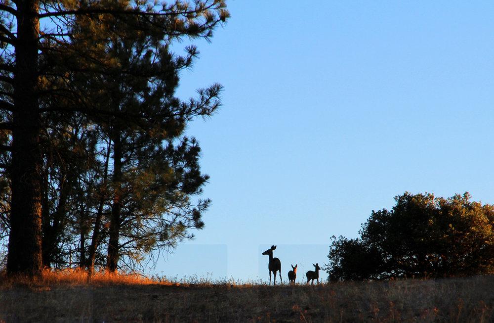081013+Three+Deer+Silhoette.jpg