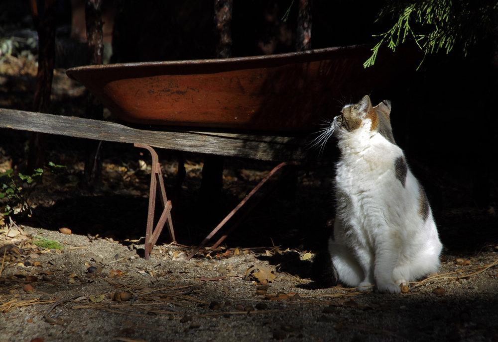 012314+Cat+&+wheelbarrel.jpg