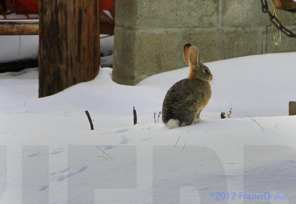 031912+Rabbit+&+Snow.jpg