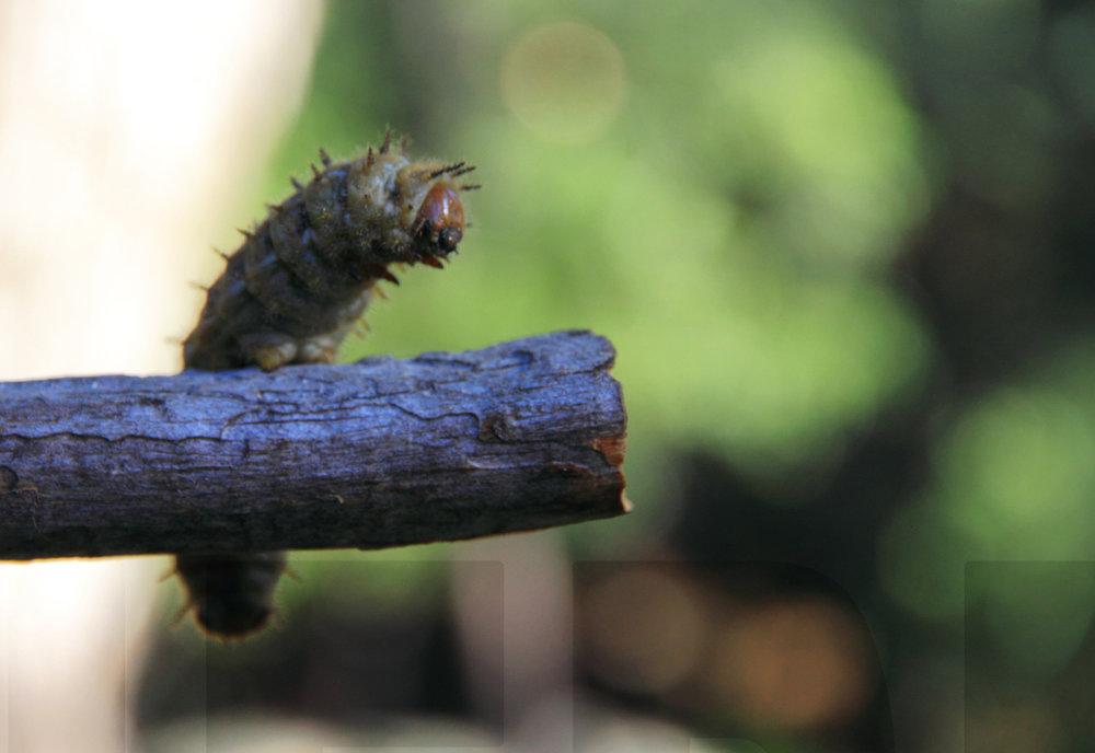060511+Caterpillar.jpg