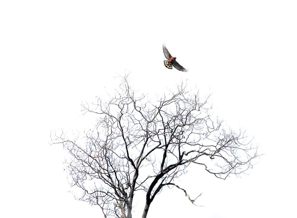 031912+Taking+Flight.jpg