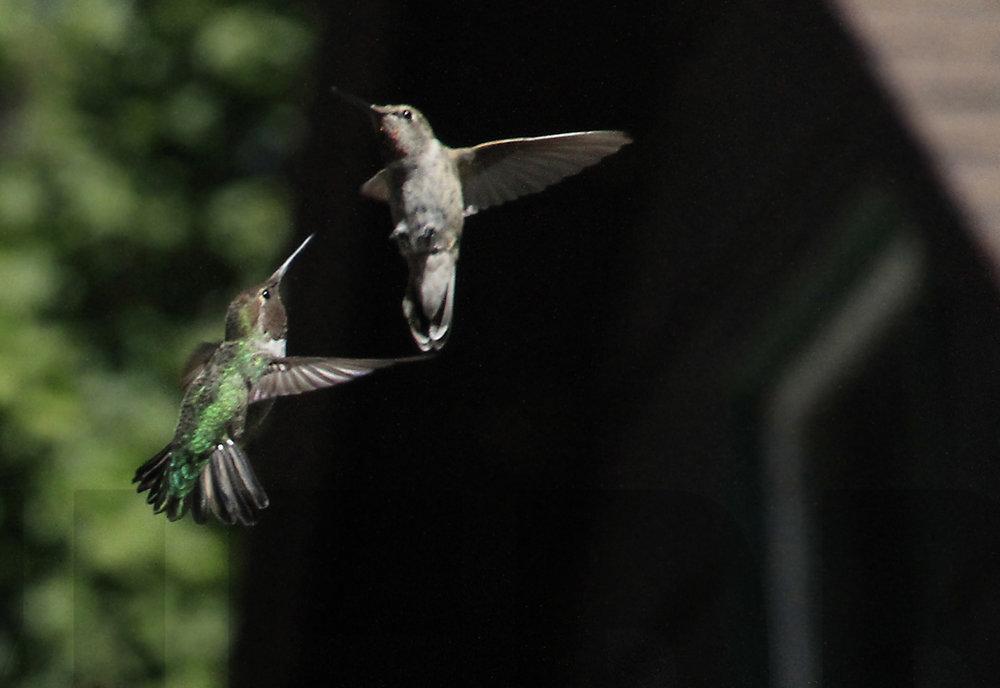 083011+Hummingbird+Ballet5.jpg