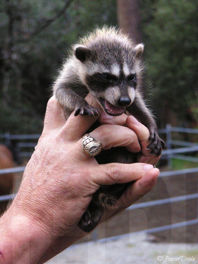 031713+Sparky+&+Raccoon+Baby.jpg