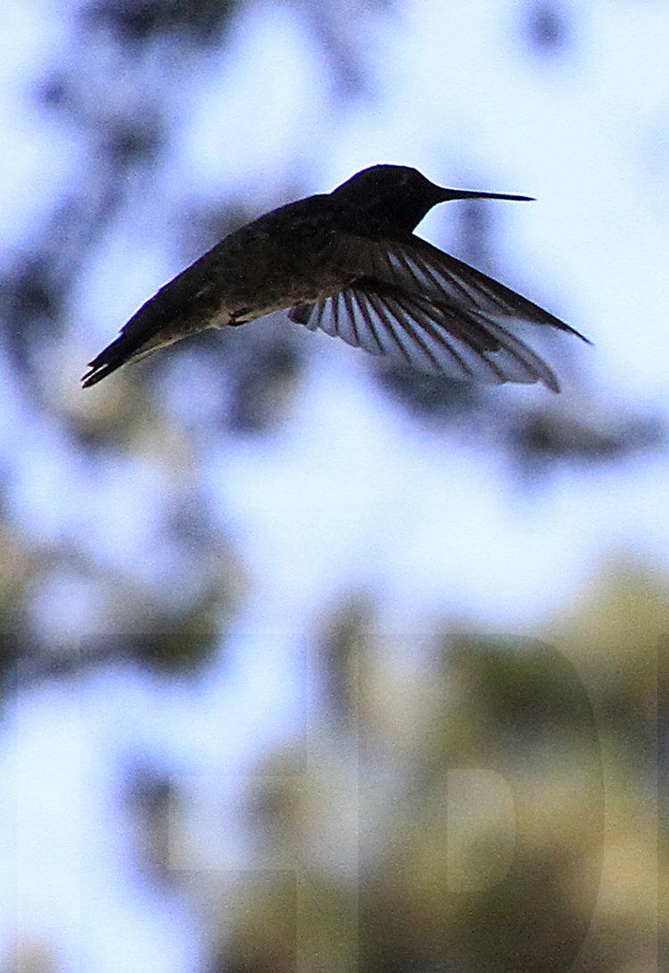 083011+Hummingbird+Ballet2.jpg