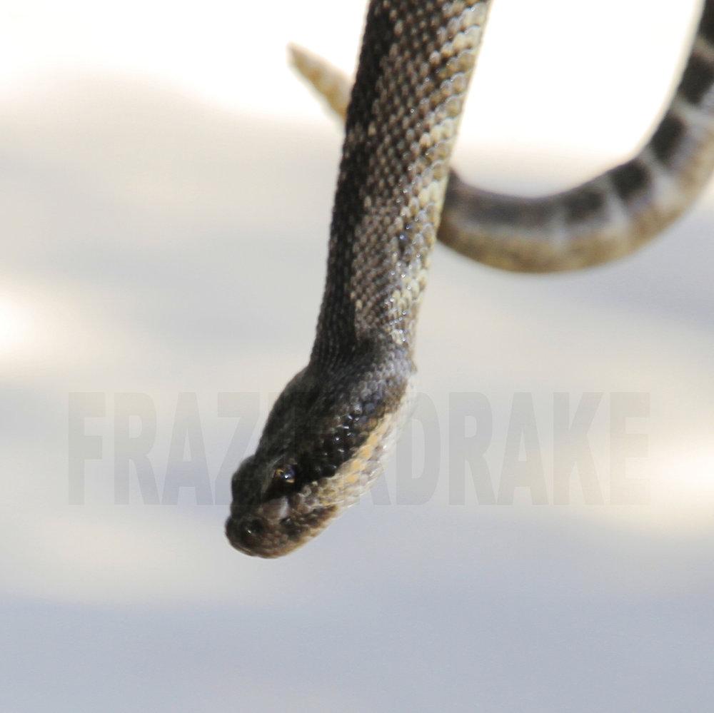 092512+Snake+Eye.jpg