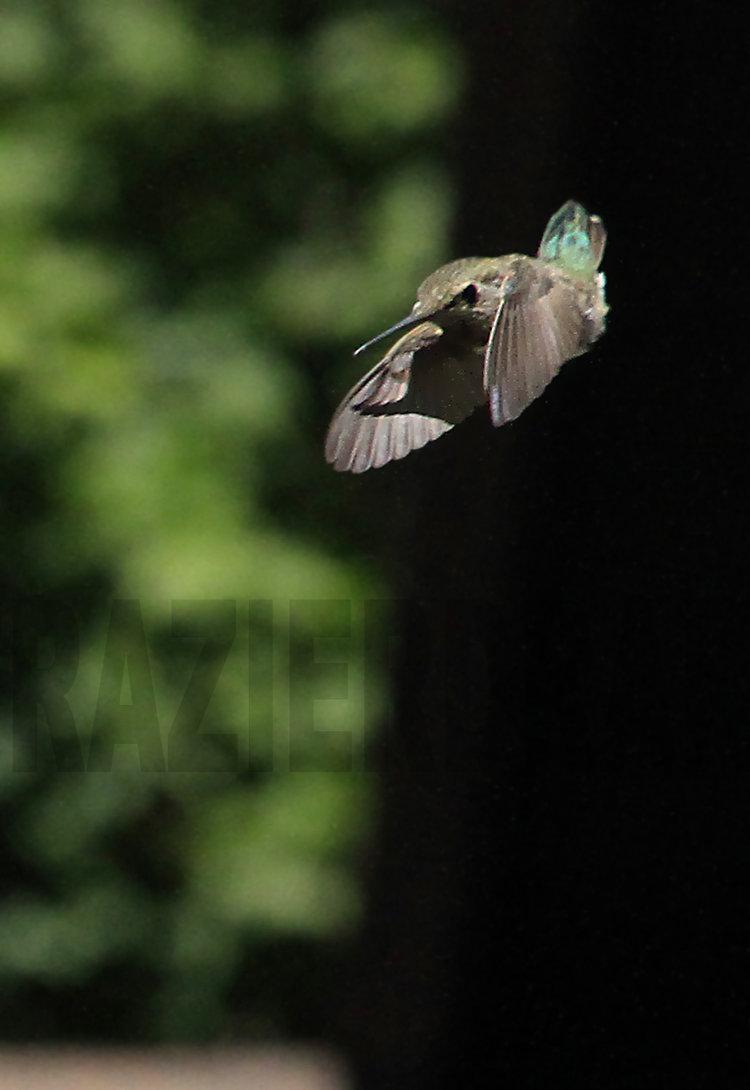 083011+Hummingbird+Ballet4.jpg