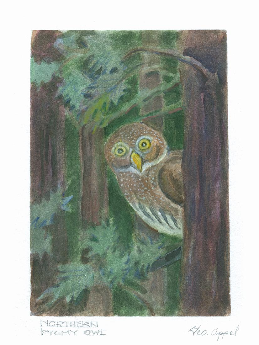 Geo Appel Northern Pygmy Owl 6x8.jpg