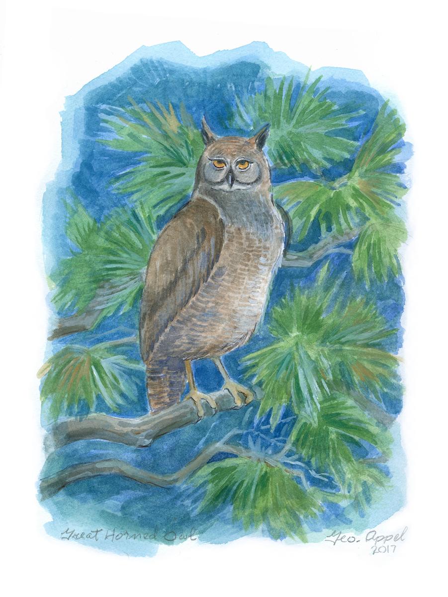Geo Appel Great Horned Owl 9 x 12.jpg