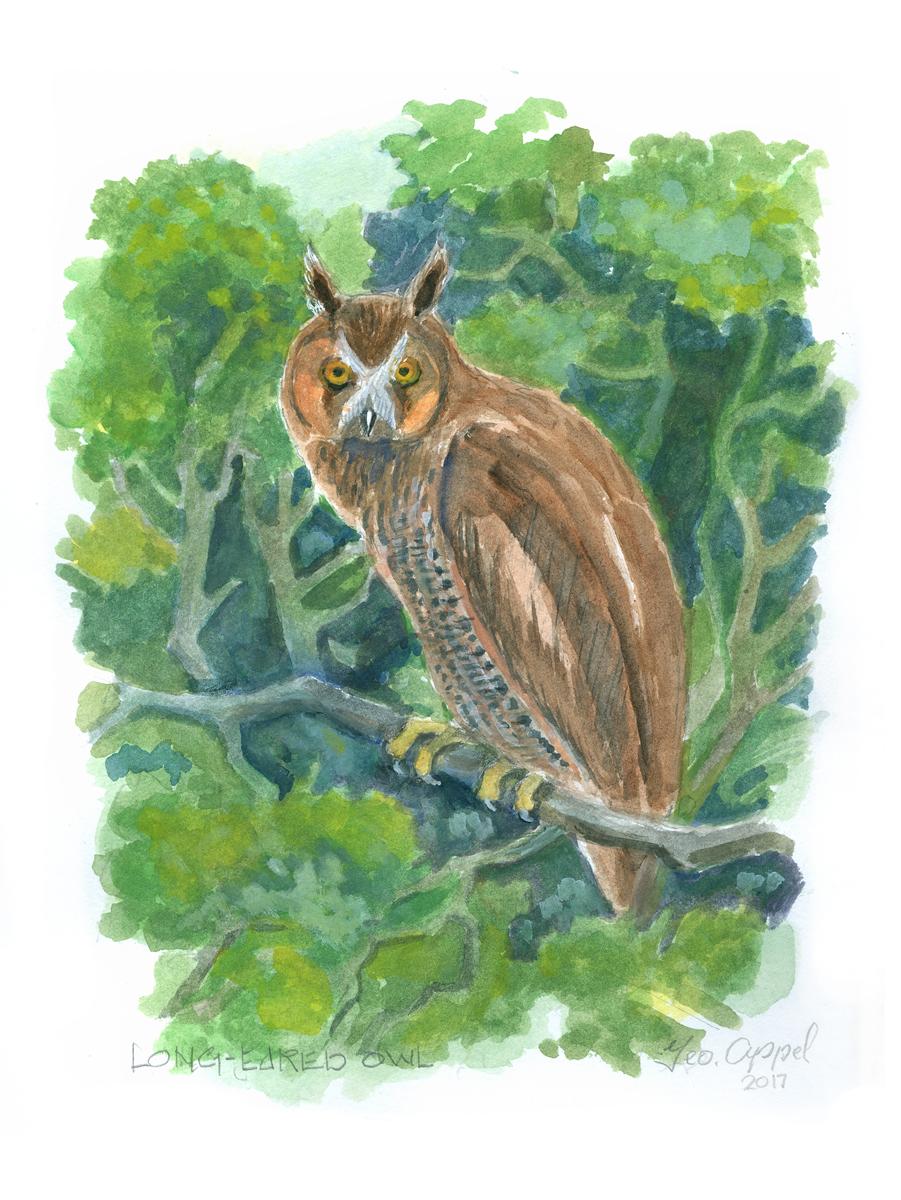 Geo Appel Log-Eared Owl 9 x 12.jpg