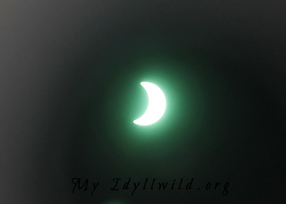 MI 082117 Solar Eclipse@Idy Lib2.jpg