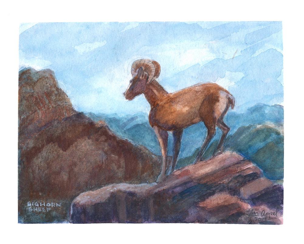Geo Appel Big Horn Sheep 8x10.jpg