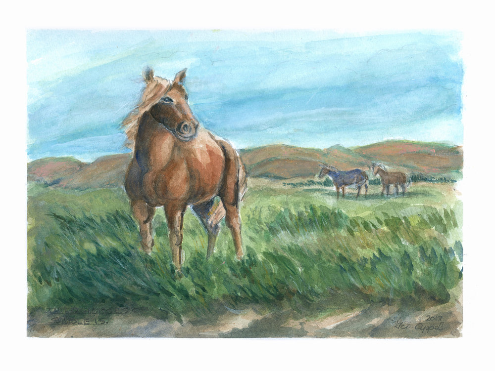 Geo Appel Wild Horses of Sable Island 9x12.jpg