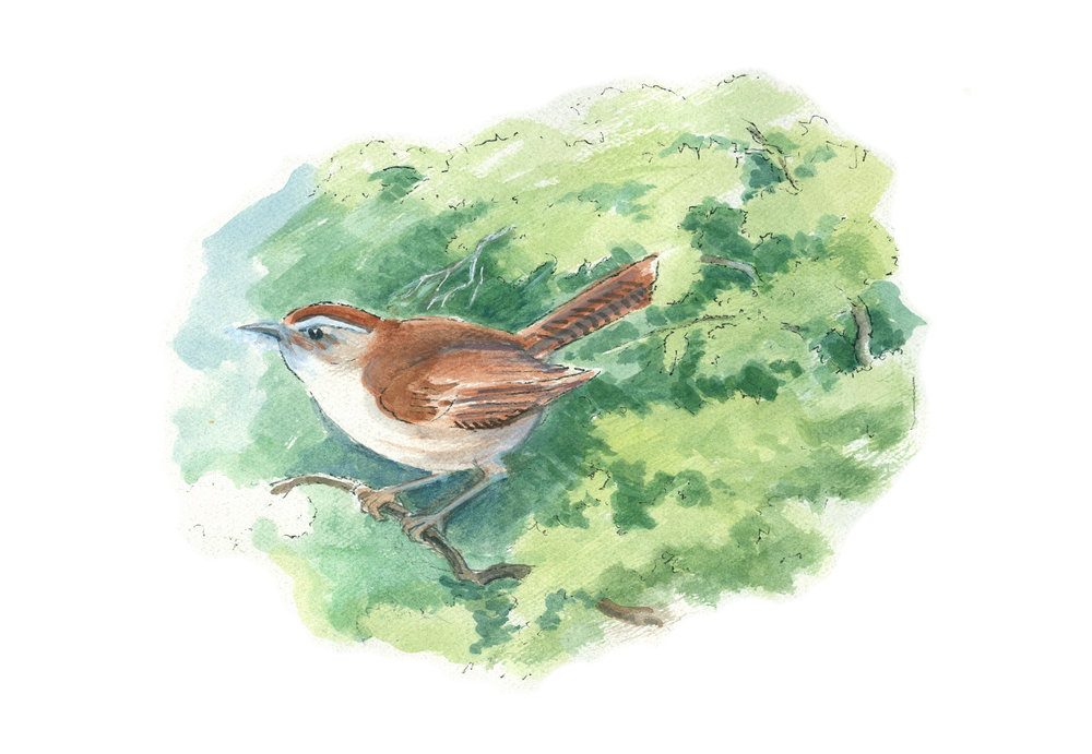 Geo Appel Bird on branch 8.5x11 Final.jpg