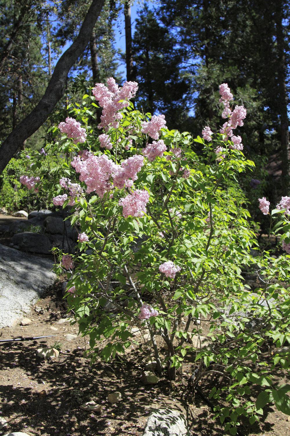 2018 AlpineGlow Gardens004.jpg