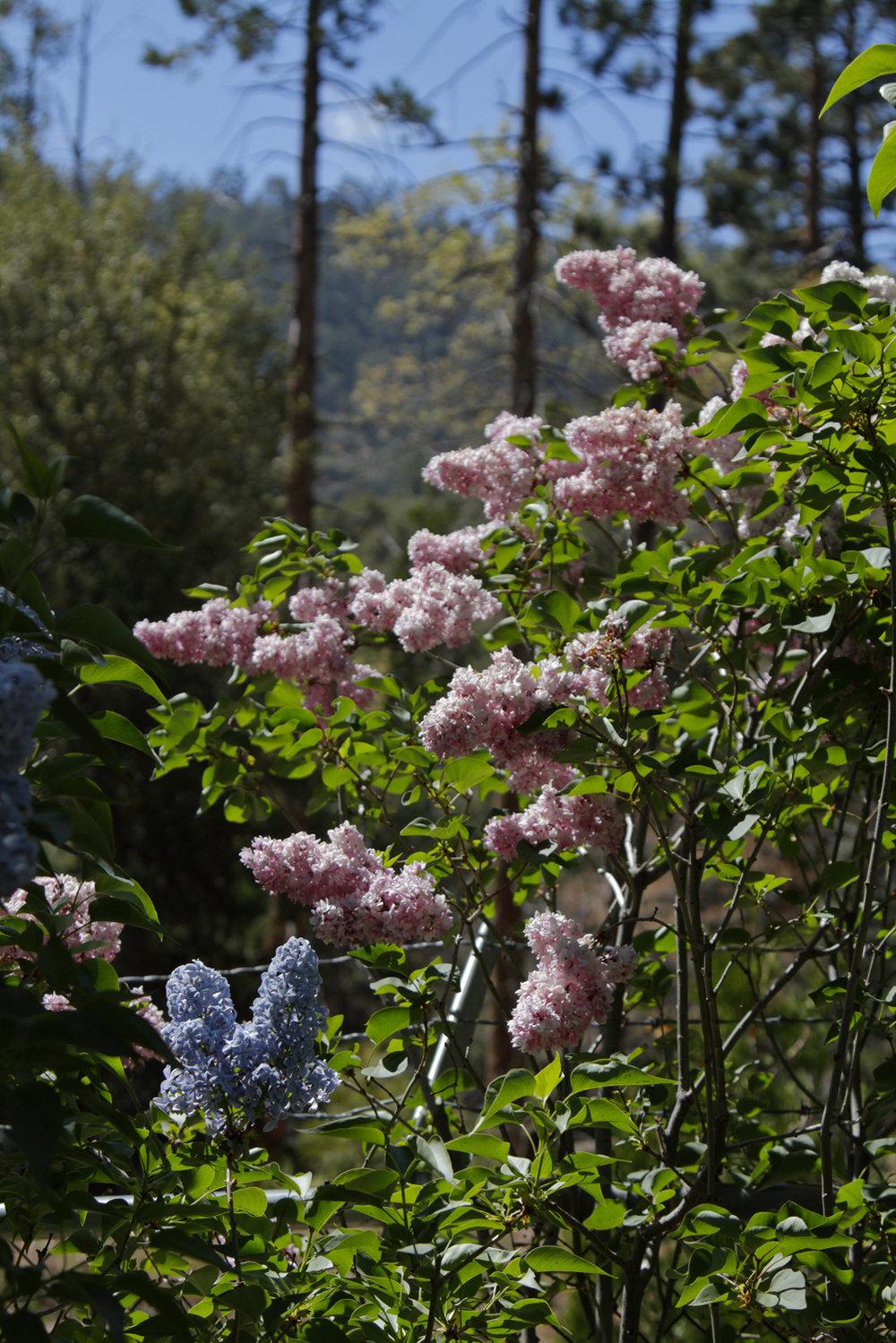 2018 AlpineGlow Gardens020.jpg