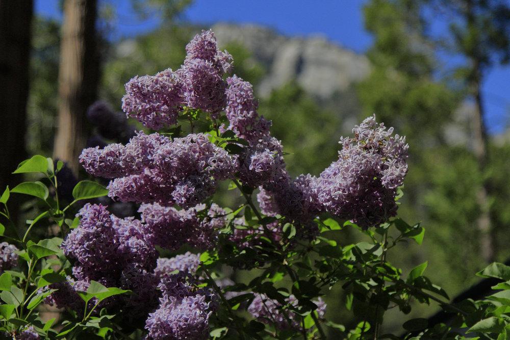 2018 AlpineGlow Gardens035.jpg