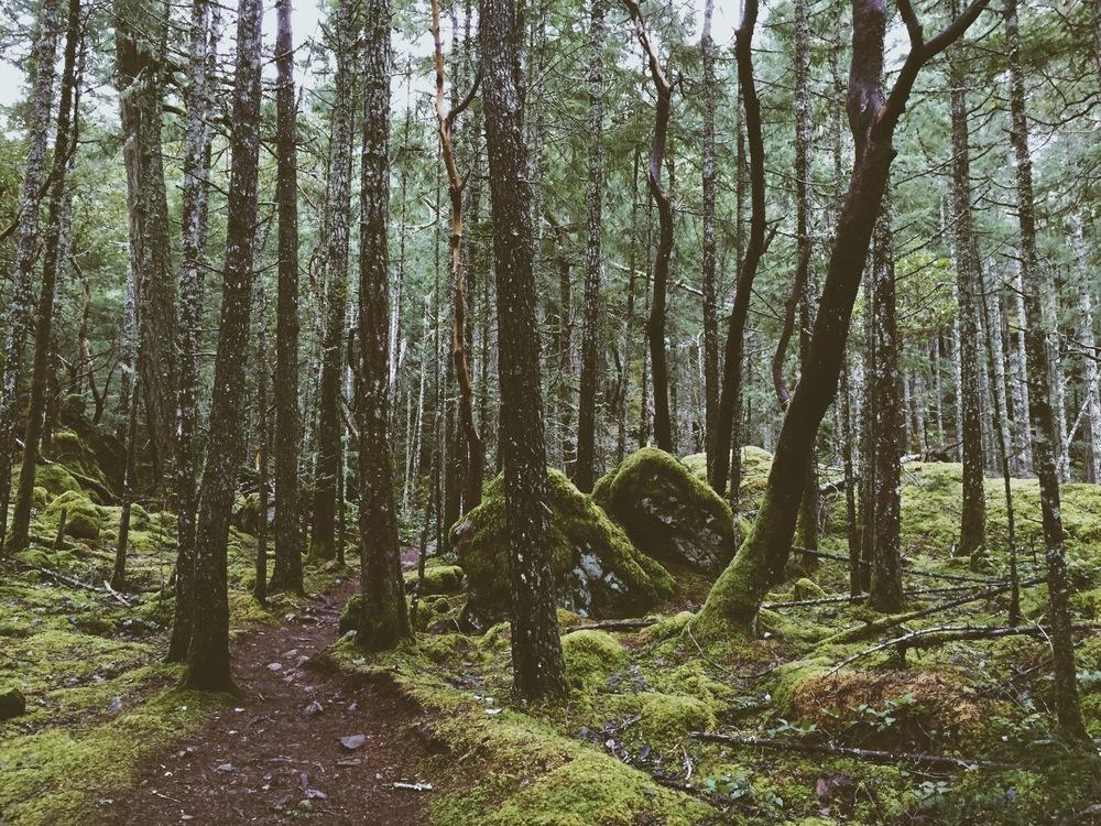 Mount Wells